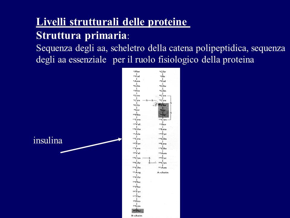 Livelli strutturali delle proteine Struttura primaria:
