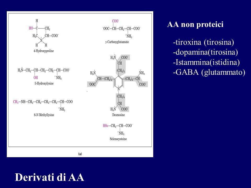 Derivati di AA AA non proteici -tiroxina (tirosina)