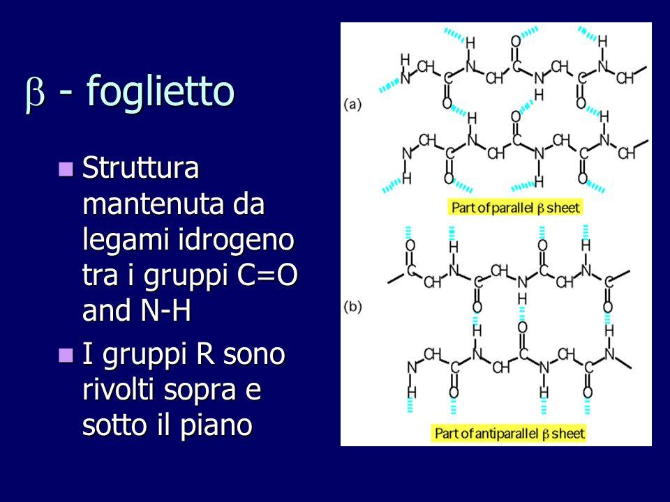 - foglietto Struttura mantenuta da legami idrogeno tra i gruppi C=O and N-H. I gruppi R sono rivolti sopra e sotto il piano.