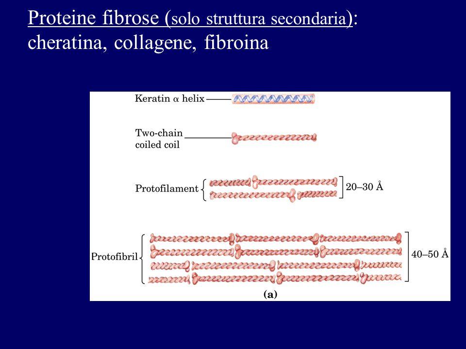Proteine fibrose (solo struttura secondaria):