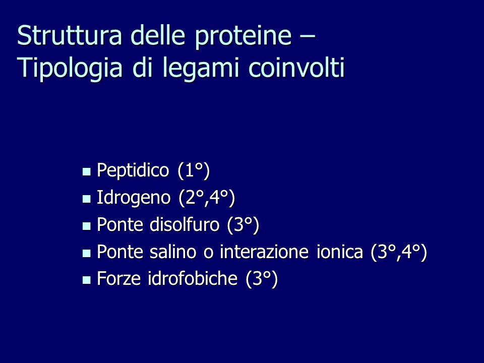 Struttura delle proteine – Tipologia di legami coinvolti