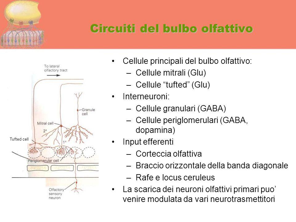 Circuiti del bulbo olfattivo
