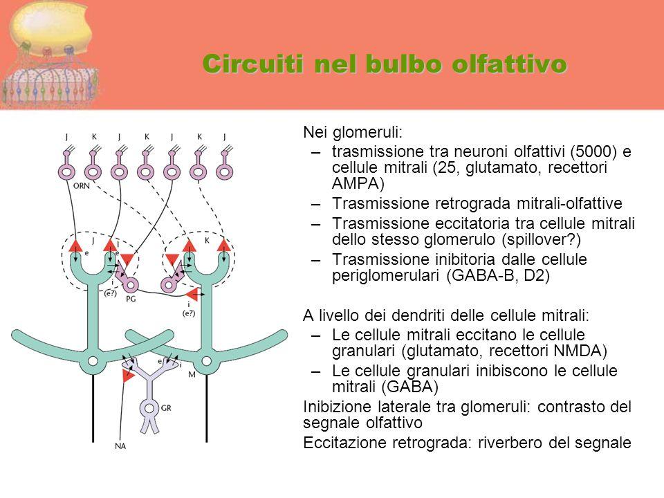 Circuiti nel bulbo olfattivo
