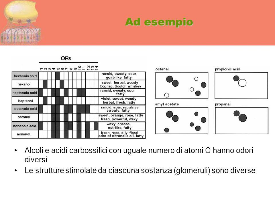 Ad esempio Alcoli e acidi carbossilici con uguale numero di atomi C hanno odori diversi.