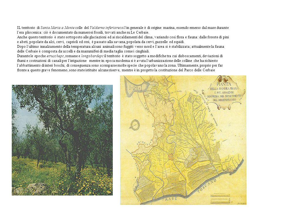 IL territorio di Santa Maria a Monte colle del Valdarno inferiorecoll in generale è di origine marina, essendo emerso dal mare durante l'era pliocenica: ciò è documentato da numerosi fossili, trovati anche su Le Cerbaie.