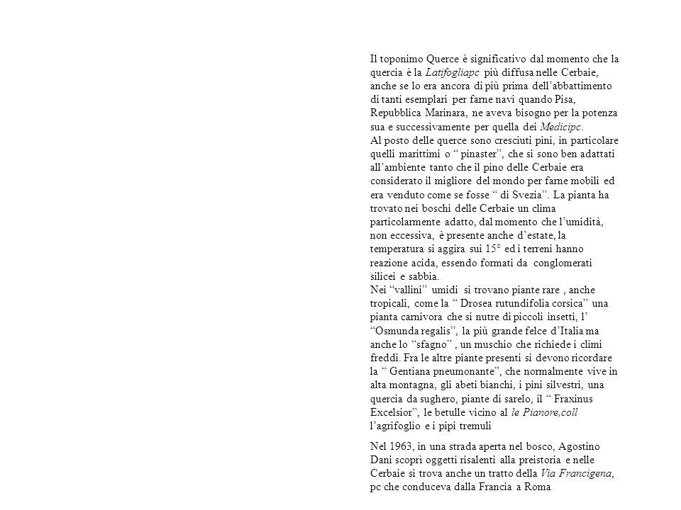 Il toponimo Querce è significativo dal momento che la quercia è la Latifogliapc più diffusa nelle Cerbaie, anche se lo era ancora di più prima dell'abbattimento di tanti esemplari per farne navi quando Pisa, Repubblica Marinara, ne aveva bisogno per la potenza sua e successivamente per quella dei Medicipc.