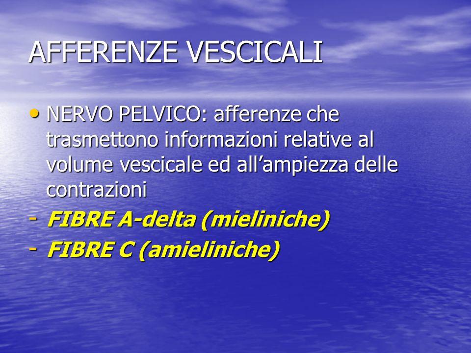 AFFERENZE VESCICALI NERVO PELVICO: afferenze che trasmettono informazioni relative al volume vescicale ed all'ampiezza delle contrazioni.