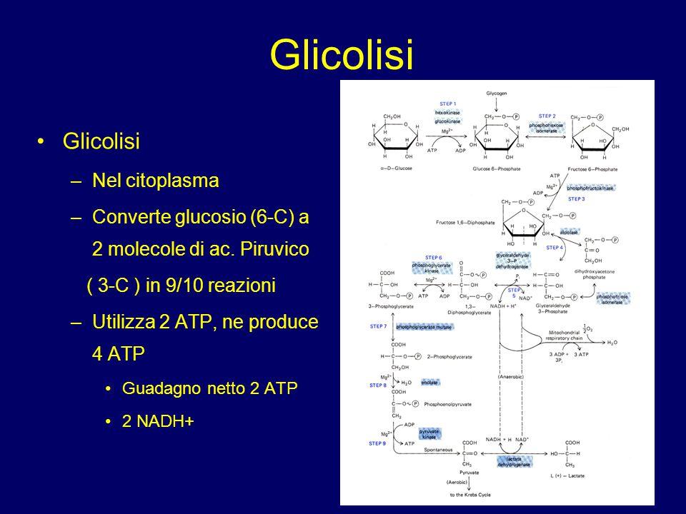 Glicolisi Glicolisi Nel citoplasma