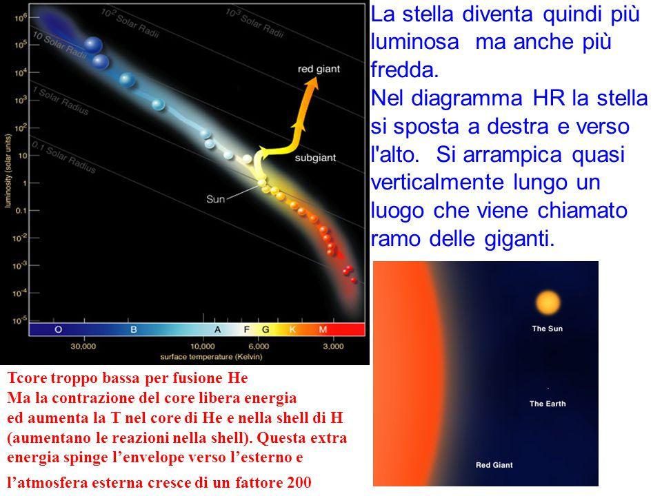 La stella diventa quindi più luminosa ma anche più fredda.
