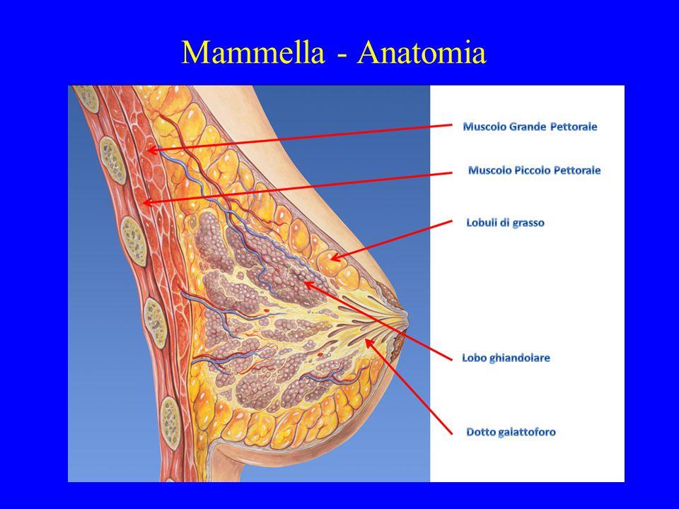 Mammella - Anatomia