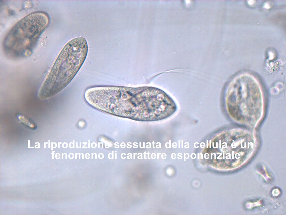 La riproduzione sessuata della cellula è un fenomeno di carattere esponenziale