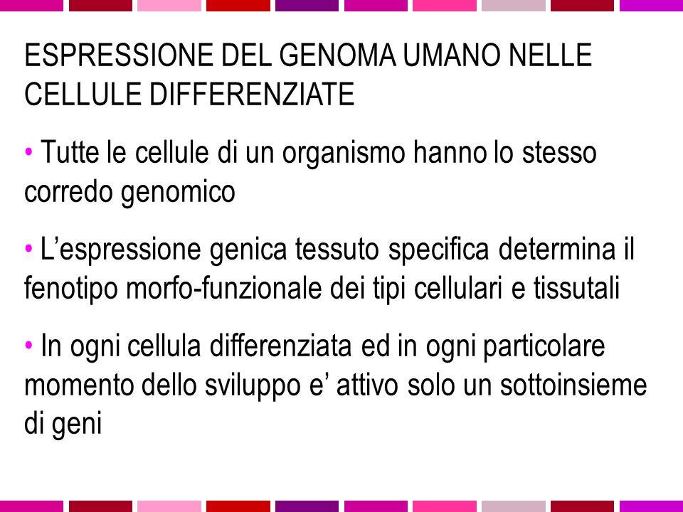 ESPRESSIONE DEL GENOMA UMANO NELLE CELLULE DIFFERENZIATE
