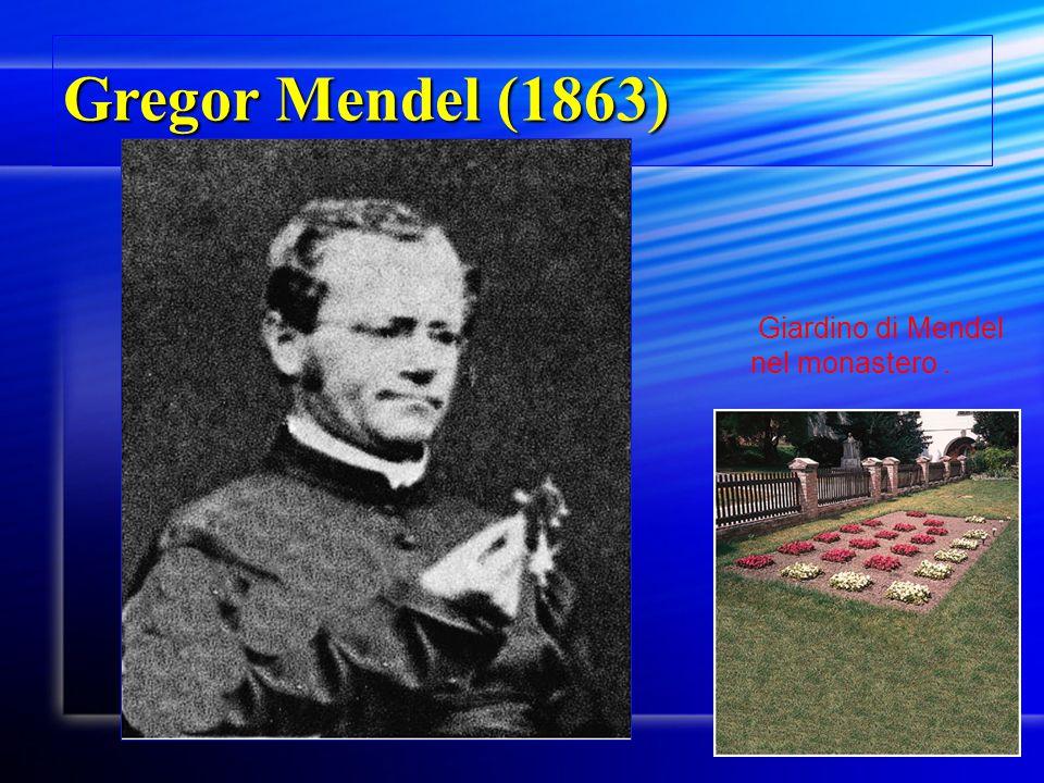 Gregor Mendel (1863) Giardino di Mendel nel monastero . Fig. 2.2