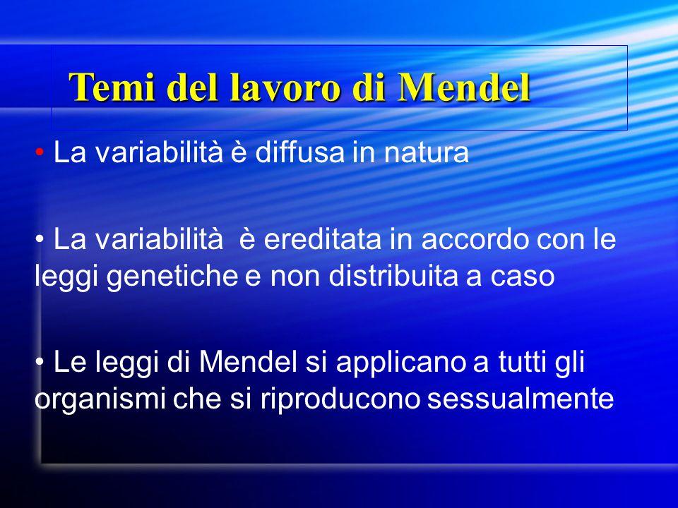 Temi del lavoro di Mendel