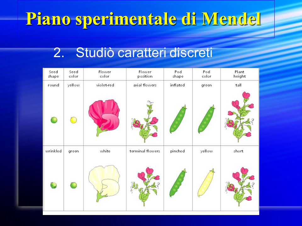 Piano sperimentale di Mendel
