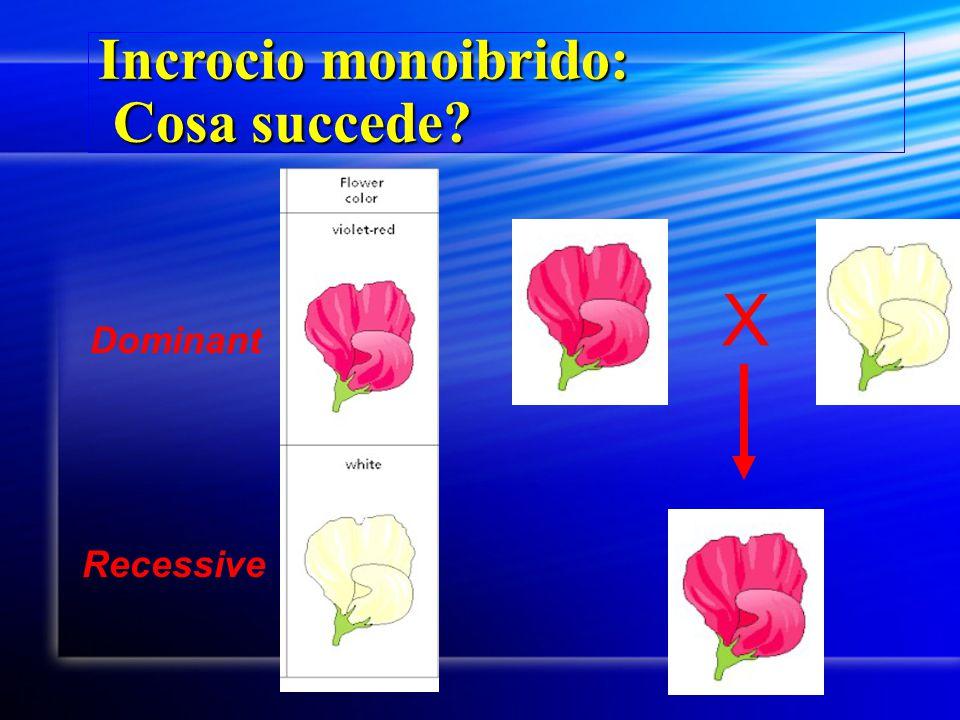 Incrocio monoibrido: Cosa succede