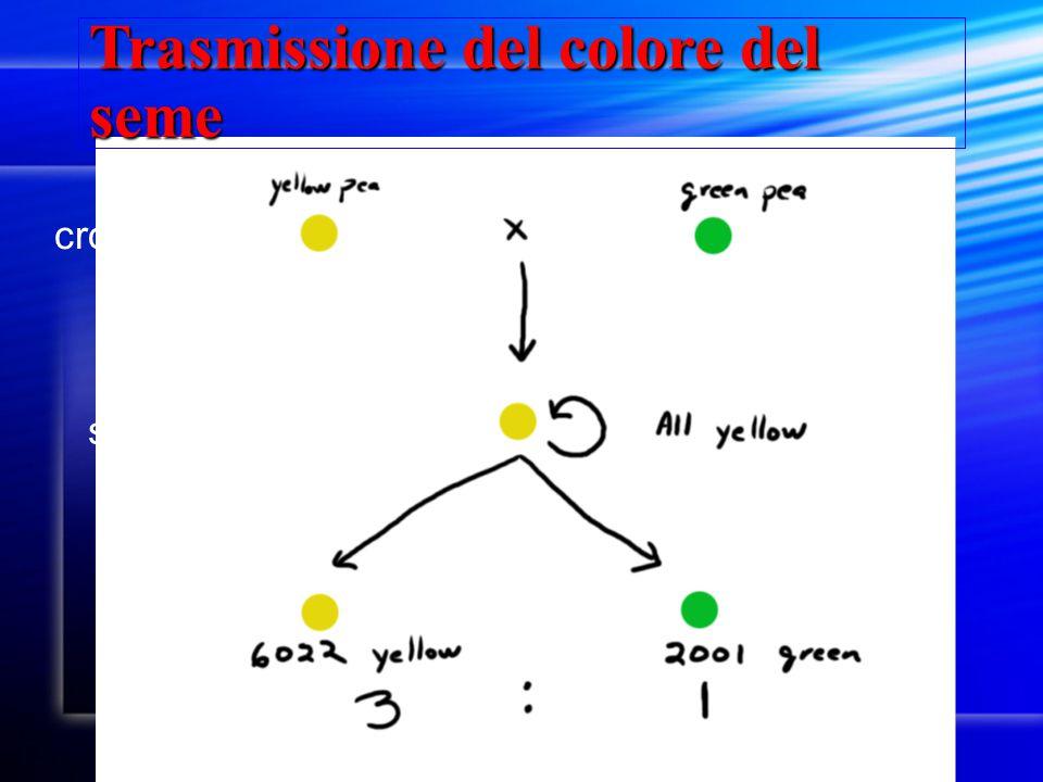 Trasmissione del colore del seme