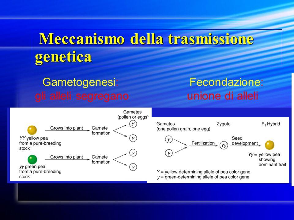 Meccanismo della trasmissione genetica