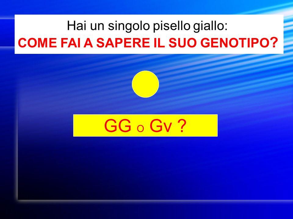 GG O Gv Hai un singolo pisello giallo: