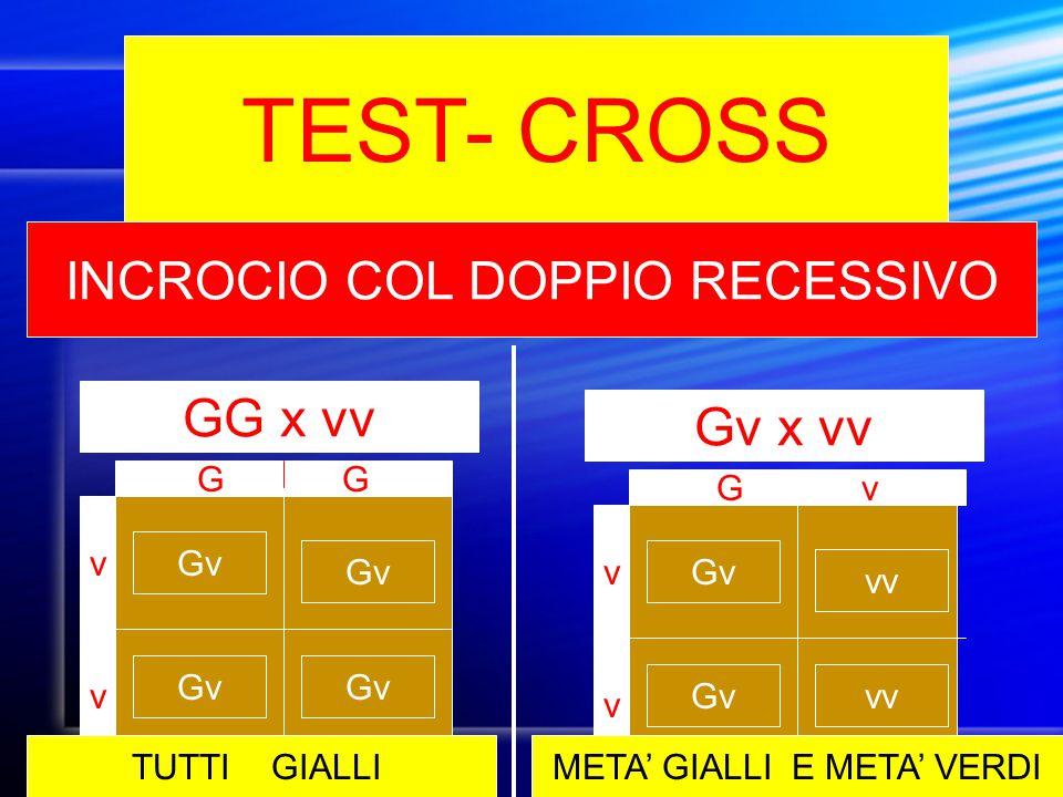 TEST- CROSS INCROCIO COL DOPPIO RECESSIVO GG x vv Gv x vv G G G v v v