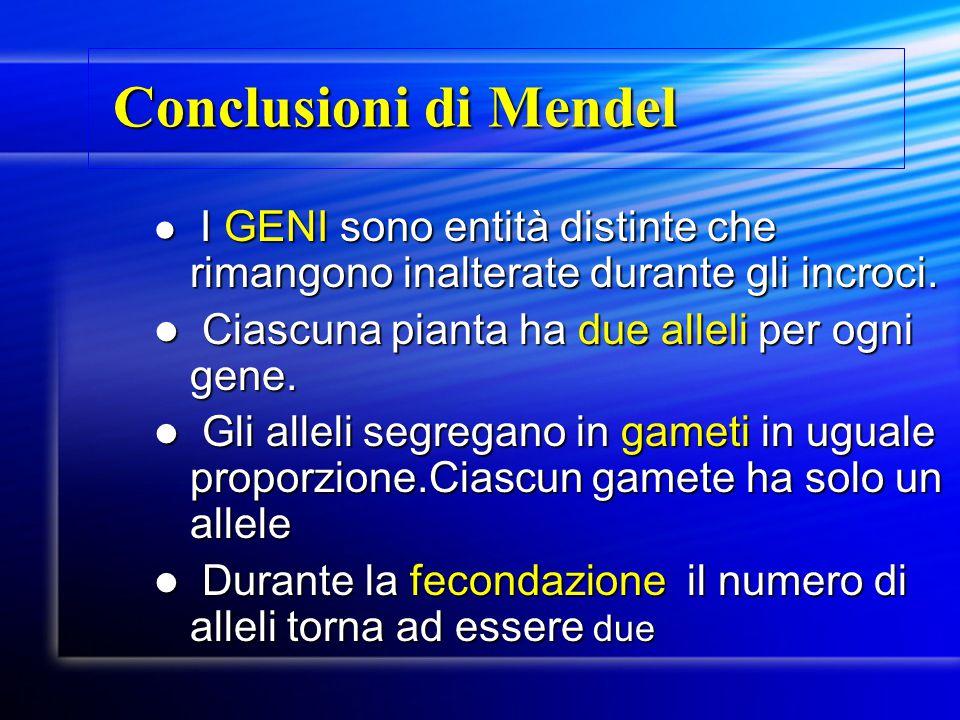 Conclusioni di Mendel Ciascuna pianta ha due alleli per ogni gene.