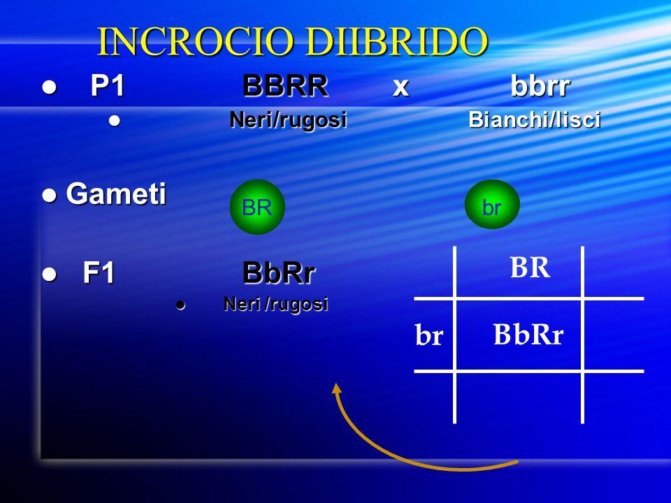 INCROCIO DIIBRIDO P1 BBRR x bbrr Gameti F1 BbRr BR br BbRr