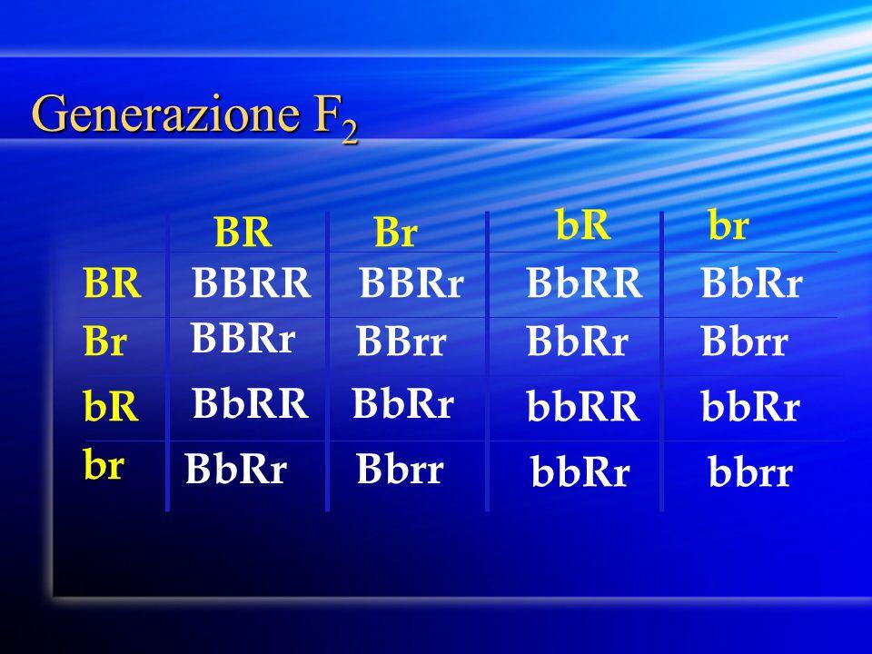 Generazione F2 Br BR br bR BR br Br bR BBRR BBRr BbRR BbRr BBRr BBrr