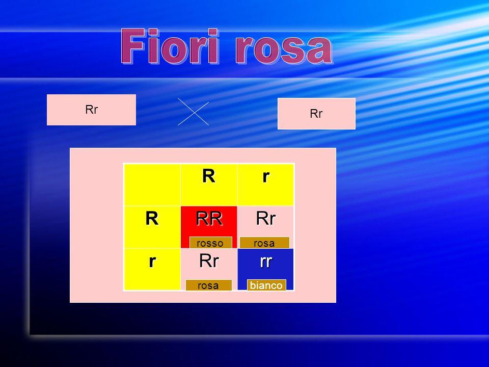 Fiori rosa Rr Rr R r RR Rr rr rosso rosa rosa bianco