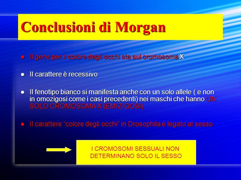 Conclusioni di Morgan Il gene per il colore degli occhi sta sul cromosoma X. Il carattere è recessivo.