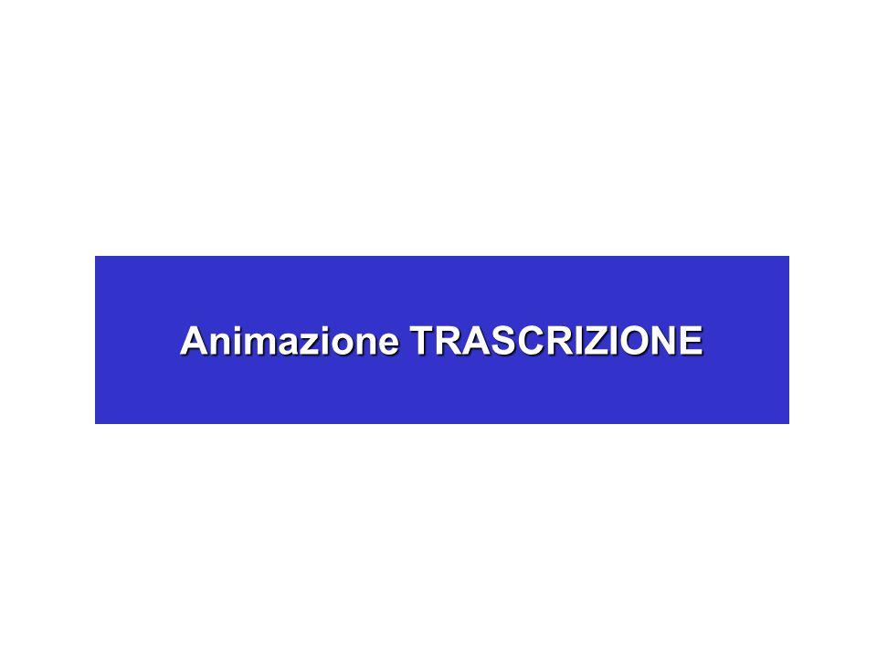 Animazione TRASCRIZIONE
