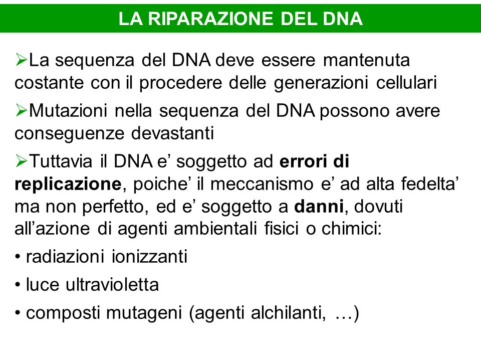 LA RIPARAZIONE DEL DNA La sequenza del DNA deve essere mantenuta costante con il procedere delle generazioni cellulari.