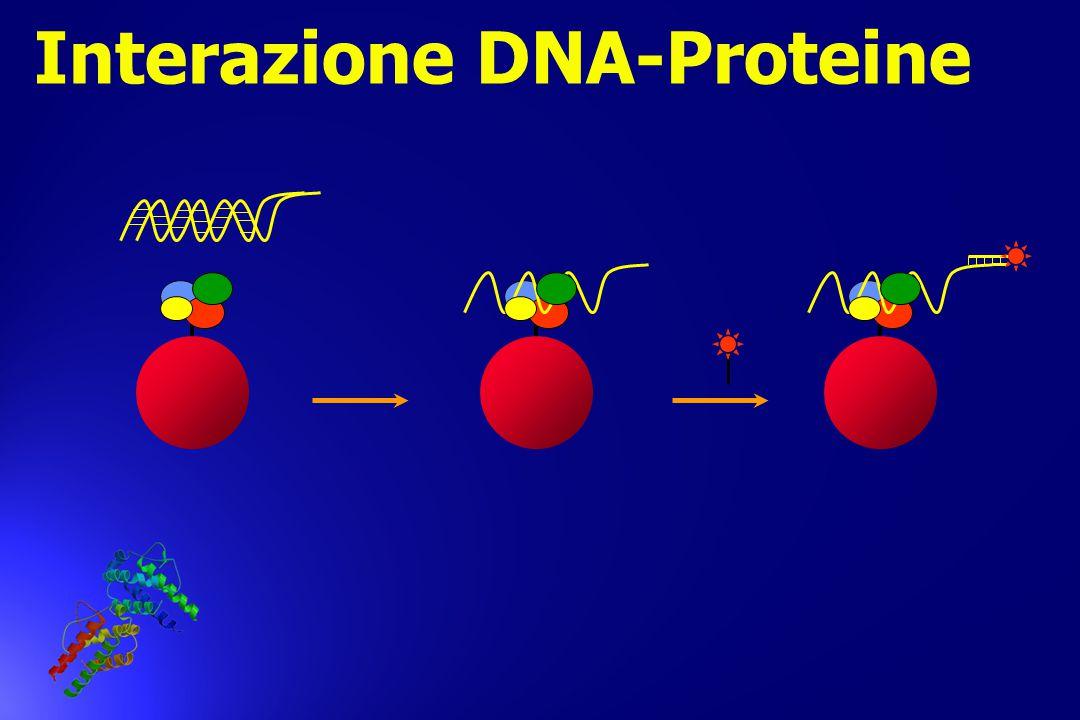 Interazione DNA-Proteine