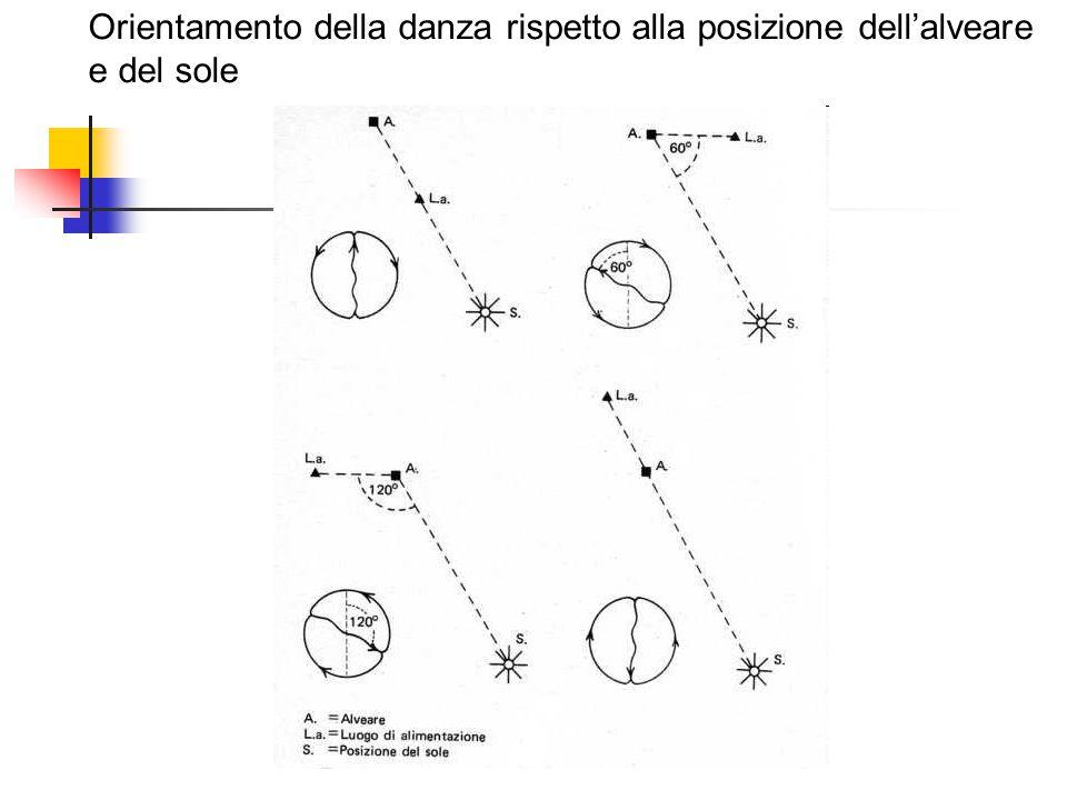 Orientamento della danza rispetto alla posizione dell'alveare