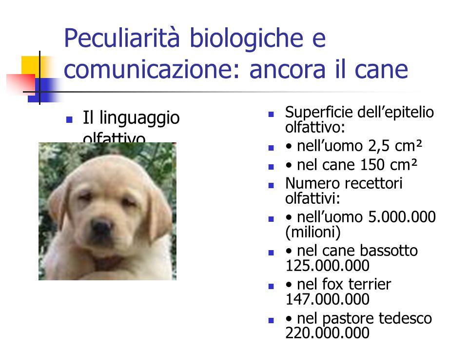 Peculiarità biologiche e comunicazione: ancora il cane