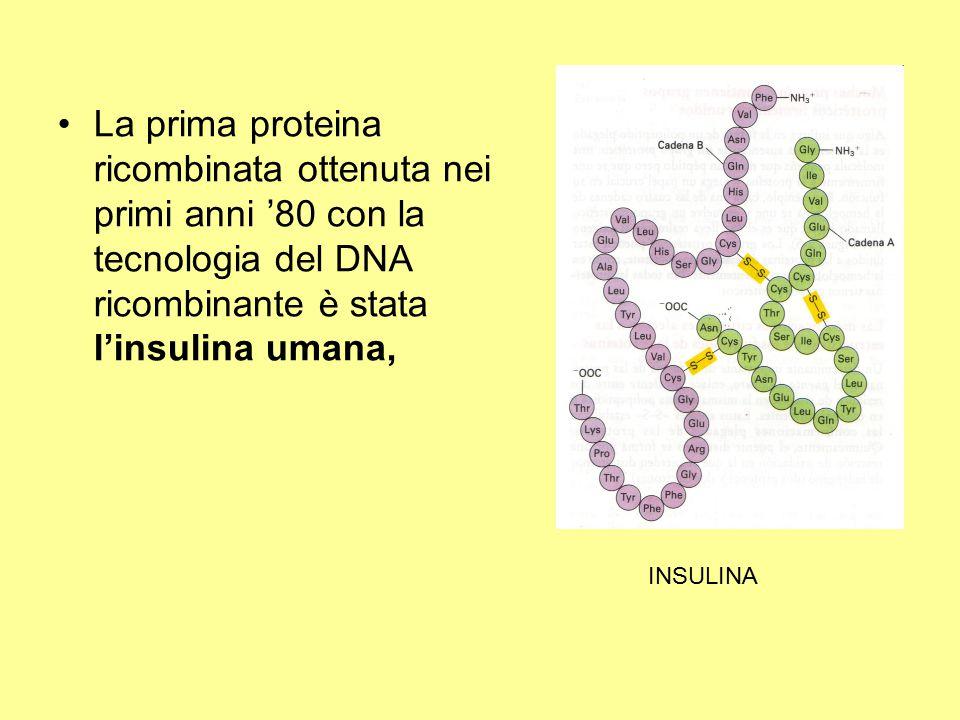 La prima proteina ricombinata ottenuta nei primi anni '80 con la tecnologia del DNA ricombinante è stata l'insulina umana,