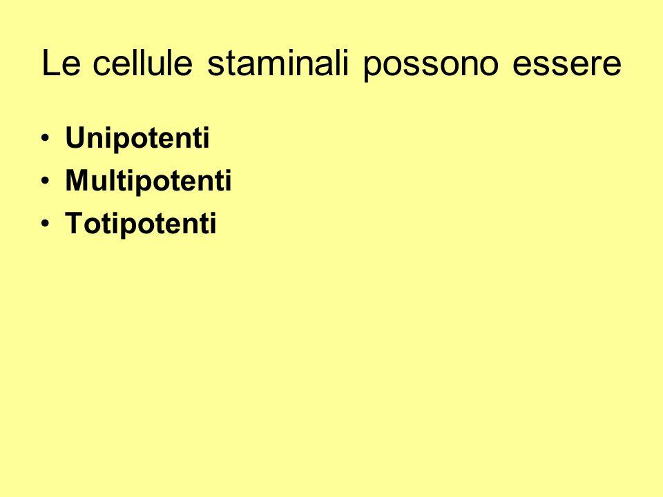 Le cellule staminali possono essere