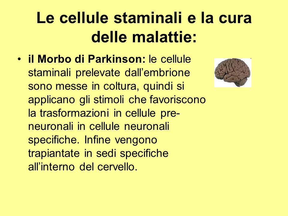 Le cellule staminali e la cura delle malattie: