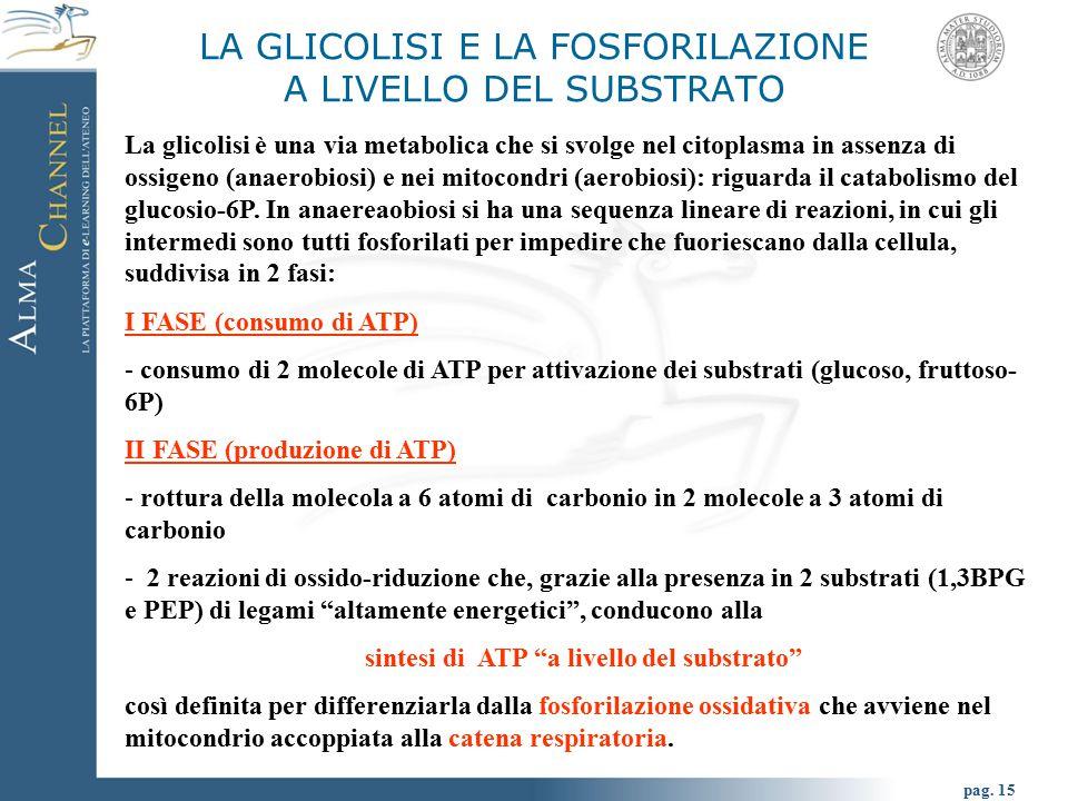 LA GLICOLISI E LA FOSFORILAZIONE A LIVELLO DEL SUBSTRATO