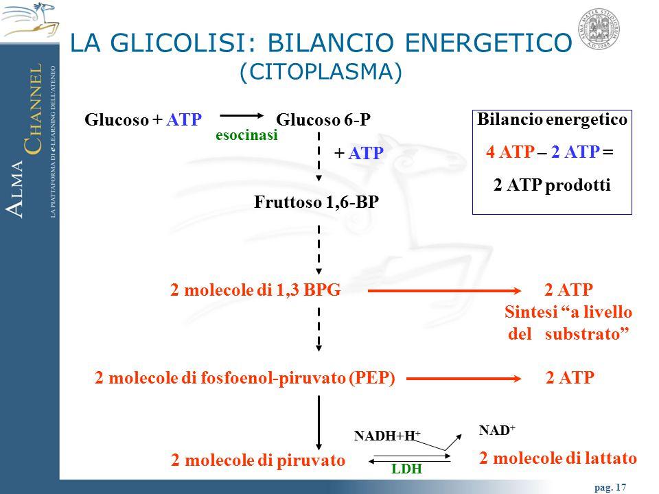 LA GLICOLISI: BILANCIO ENERGETICO (CITOPLASMA)