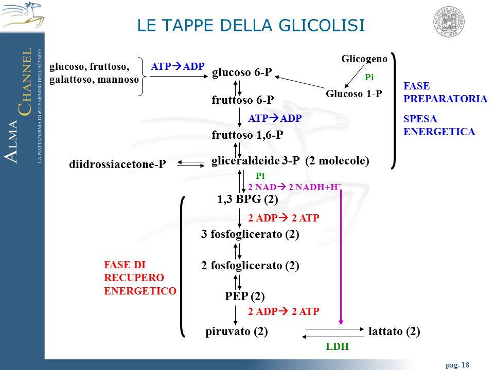 LE TAPPE DELLA GLICOLISI