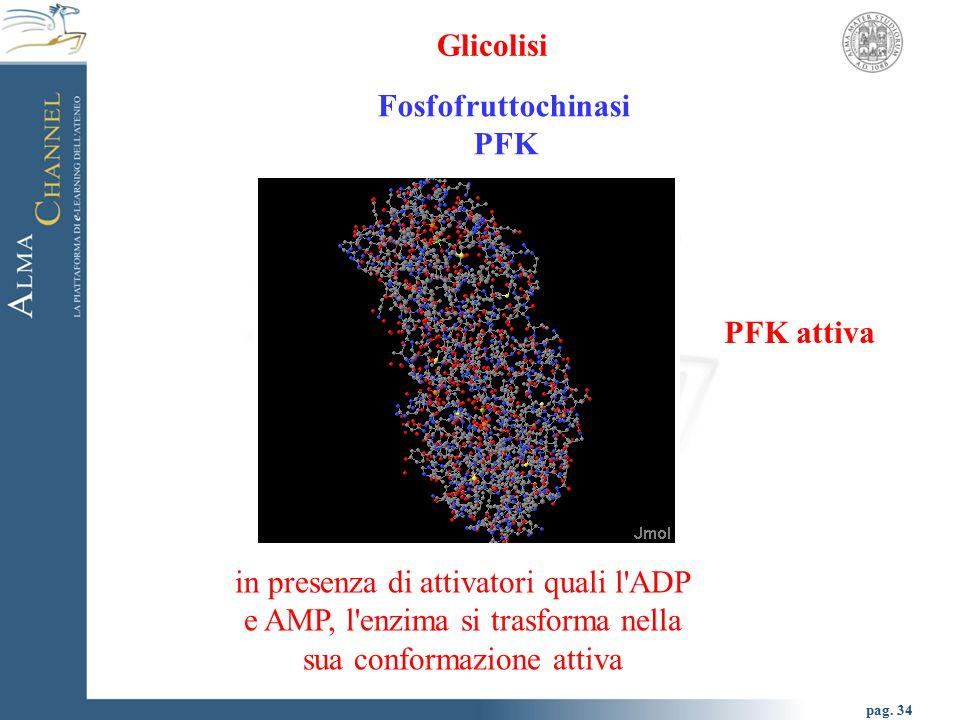 Glicolisi Fosfofruttochinasi. PFK. PFK attiva.