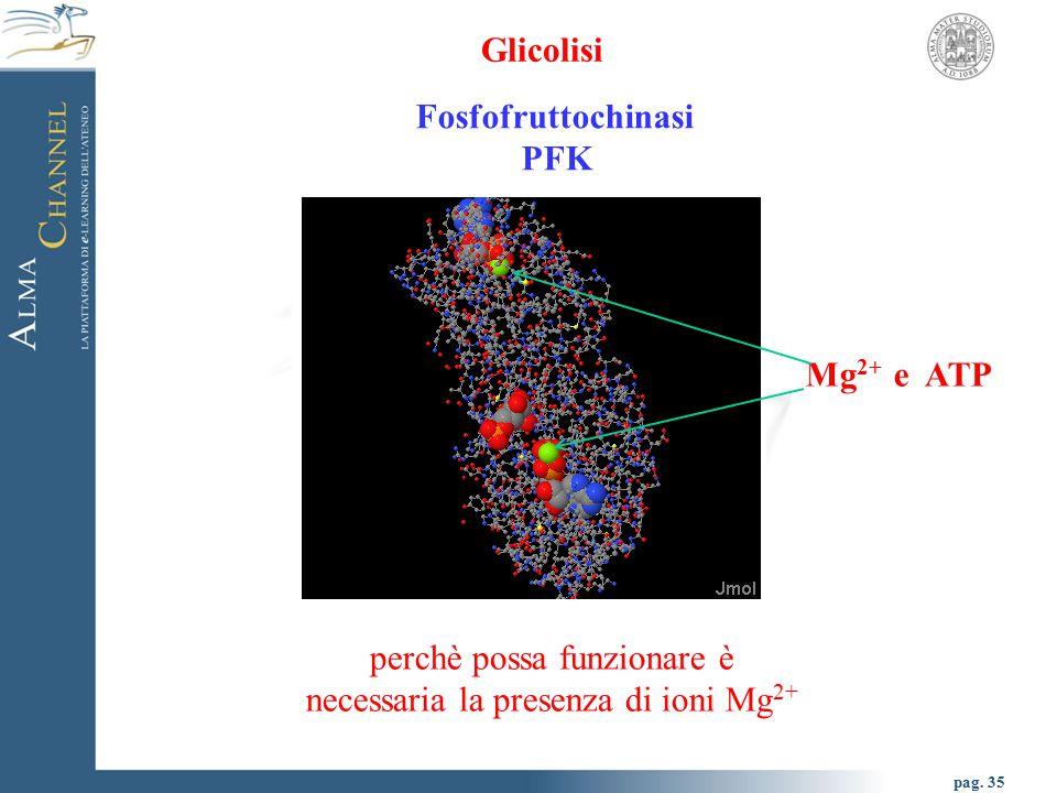 perchè possa funzionare è necessaria la presenza di ioni Mg2+