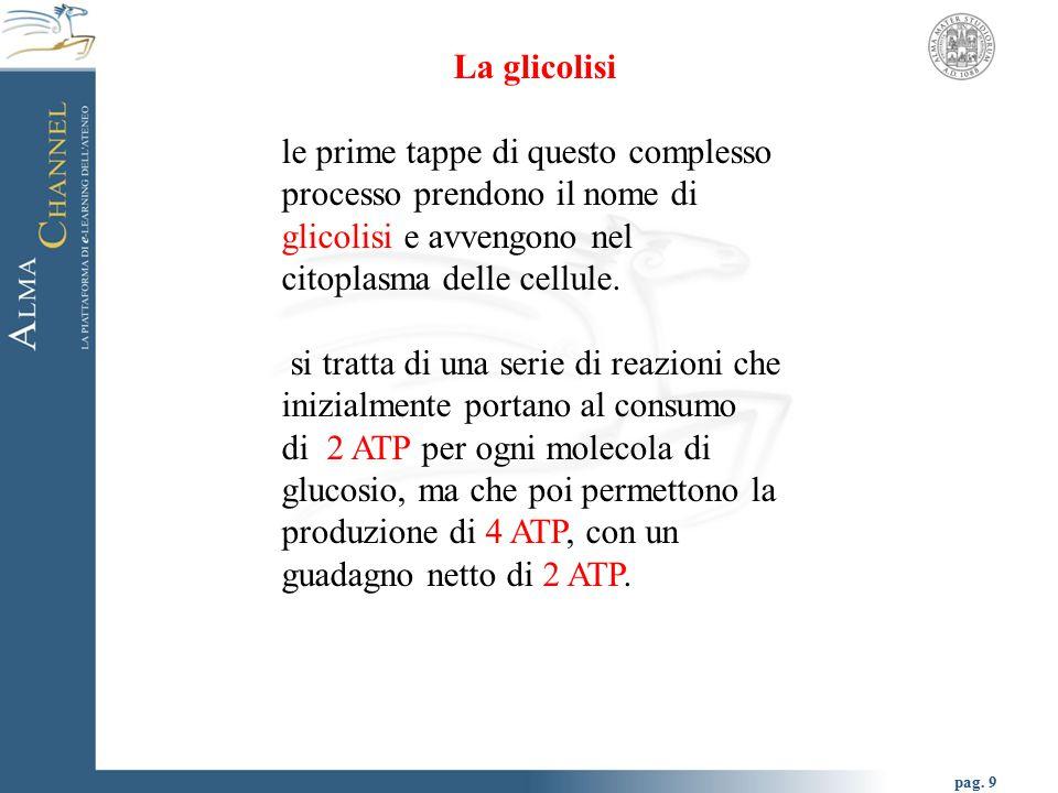 La glicolisi le prime tappe di questo complesso processo prendono il nome di glicolisi e avvengono nel citoplasma delle cellule.