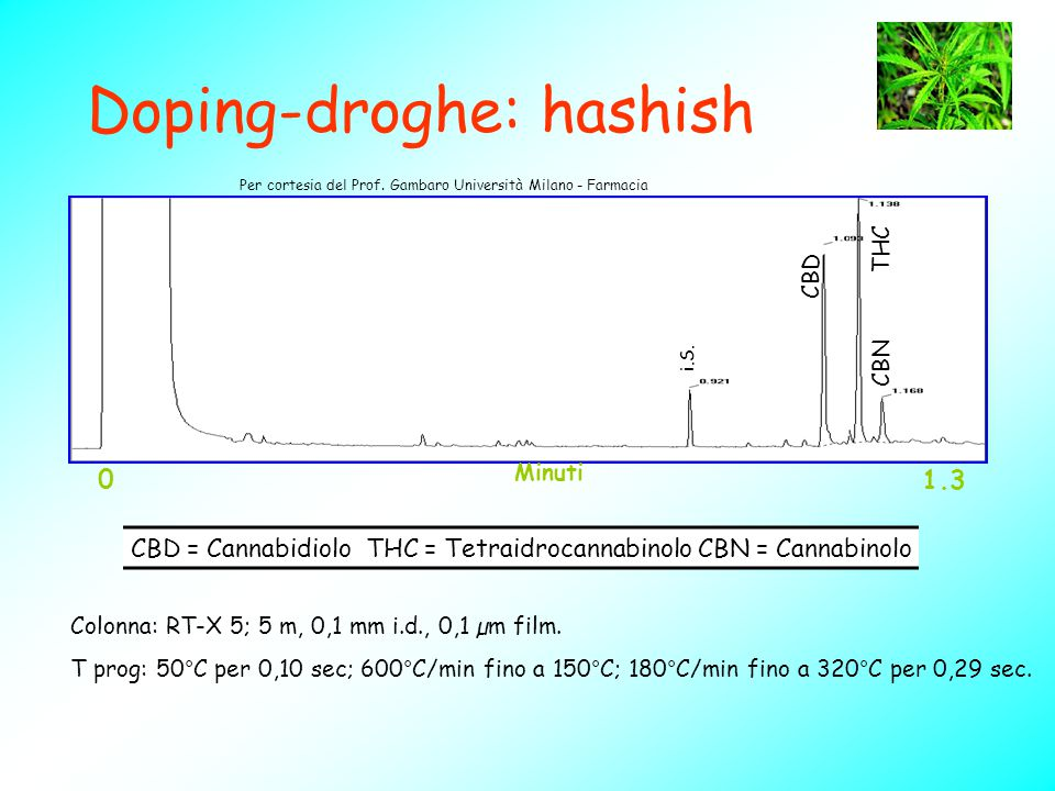 Doping-droghe: hashish