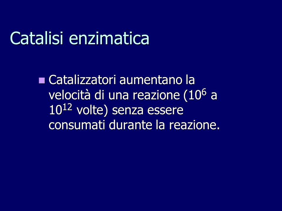Catalisi enzimatica Catalizzatori aumentano la velocità di una reazione (106 a 1012 volte) senza essere consumati durante la reazione.