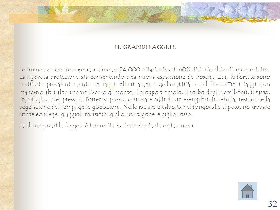 LE GRANDI FAGGETE