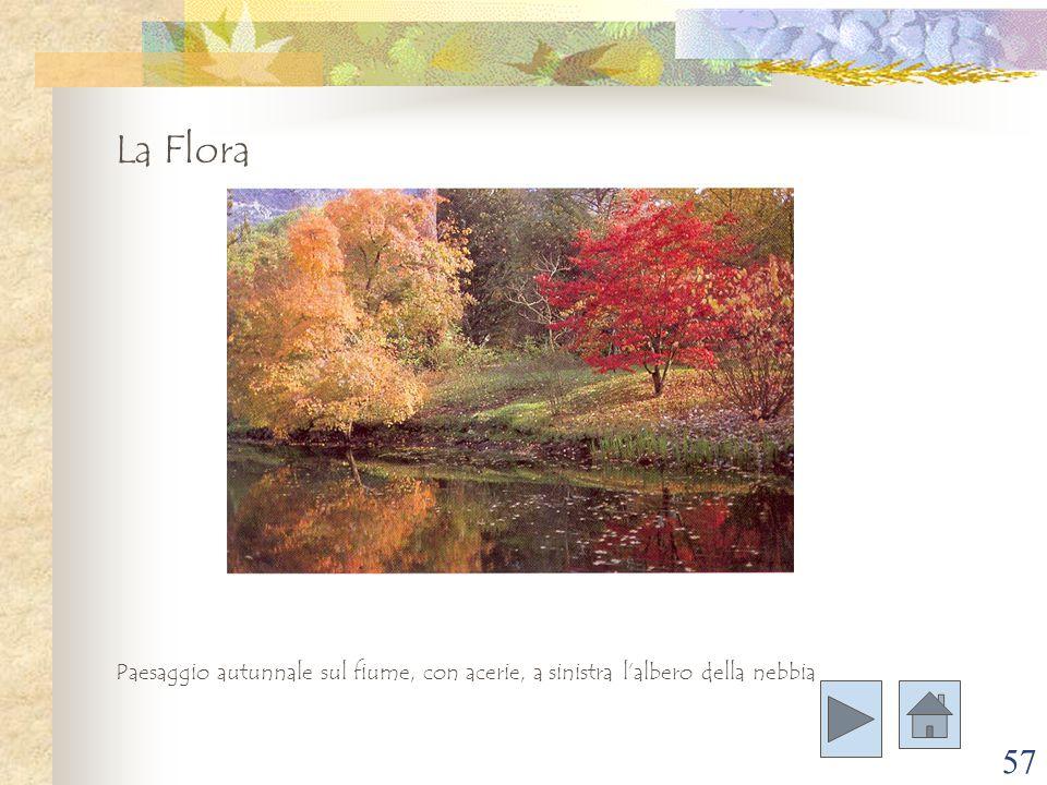 La Flora Paesaggio autunnale sul fiume, con acerie, a sinistra l'albero della nebbia
