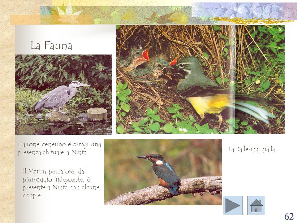 La Fauna L'airone cenerino è ormai una presenza abituale a Ninfa