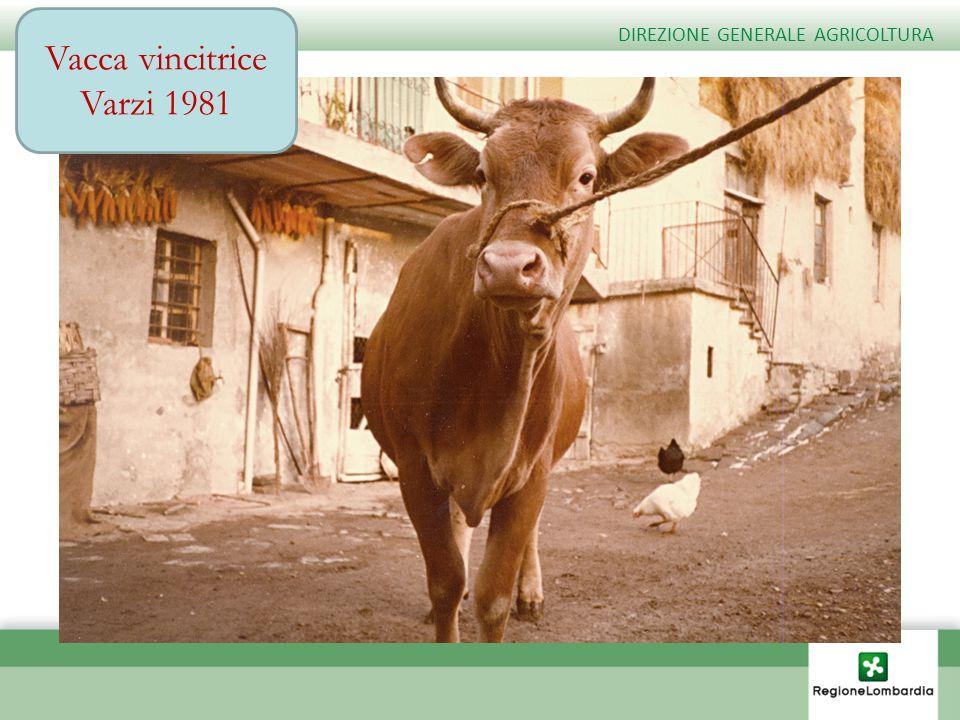Vacca vincitrice Varzi 1981 DIREZIONE GENERALE AGRICOLTURA
