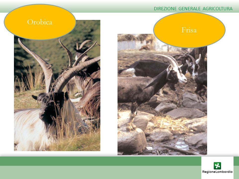 Orobica DIREZIONE GENERALE AGRICOLTURA Frisa